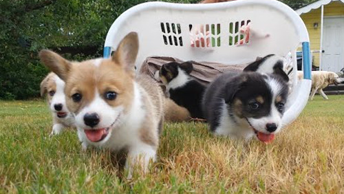anthrax_basket_full_of_puppies_1